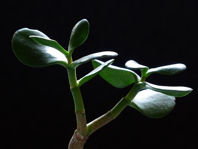 Enterfind - Luennot